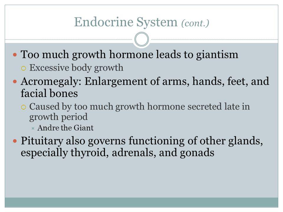 Endocrine System (cont.)