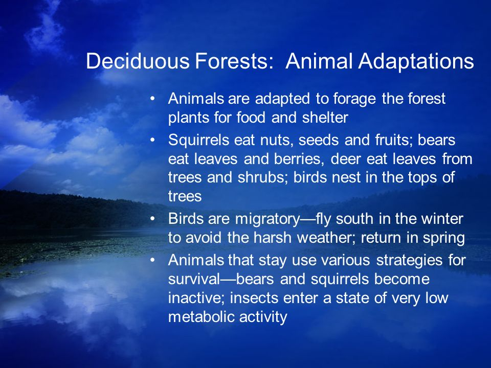 Deciduous Forests: Animal Adaptations