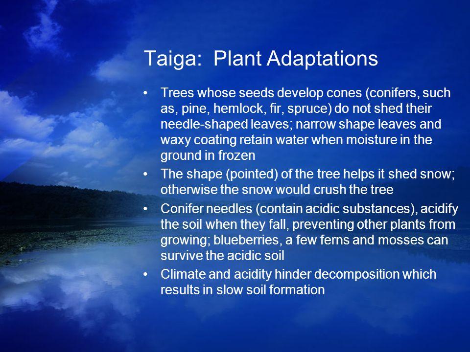 Taiga: Plant Adaptations