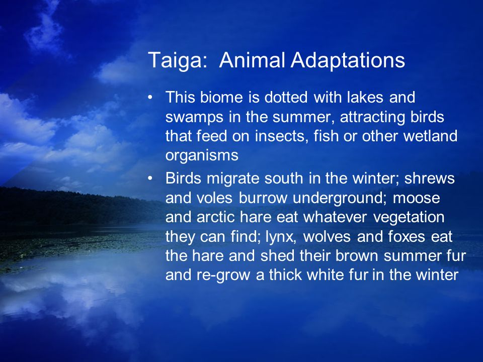 Taiga: Animal Adaptations