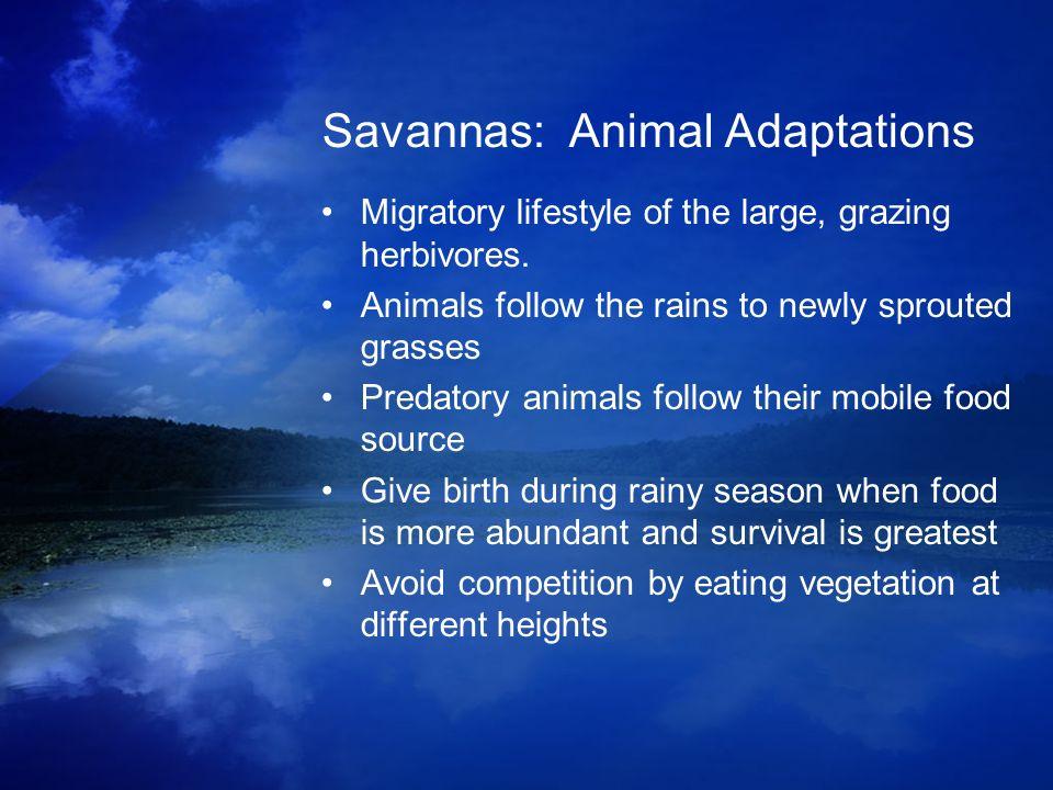 Savannas: Animal Adaptations