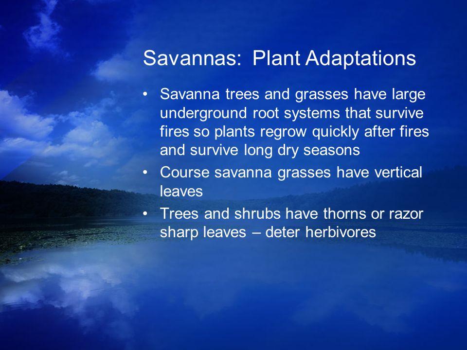 Savannas: Plant Adaptations