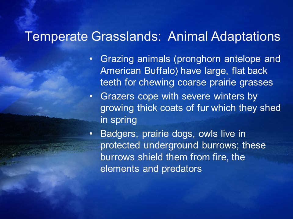 Temperate Grasslands: Animal Adaptations