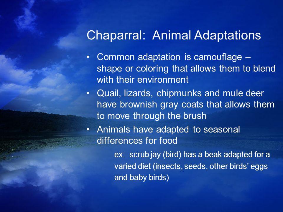 Chaparral: Animal Adaptations