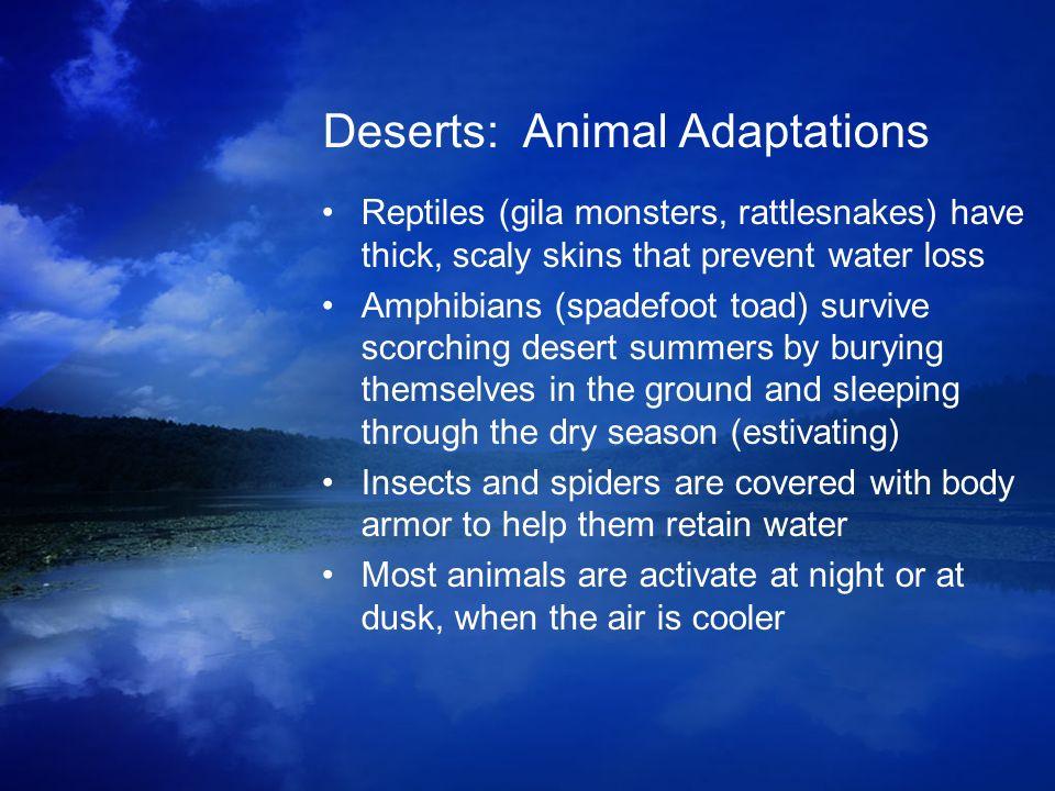 Deserts: Animal Adaptations