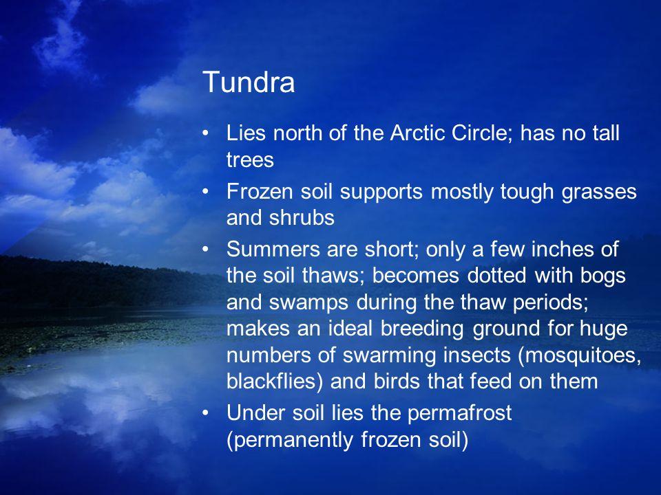 Tundra Lies north of the Arctic Circle; has no tall trees