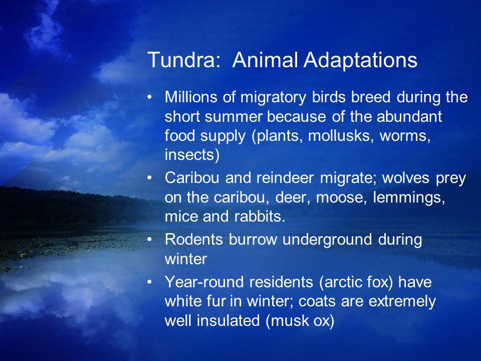 Tundra: Animal Adaptations