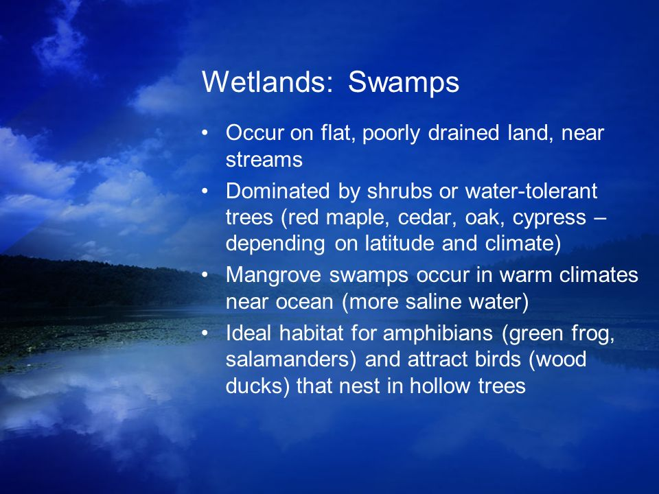 Wetlands: Swamps Occur on flat, poorly drained land, near streams