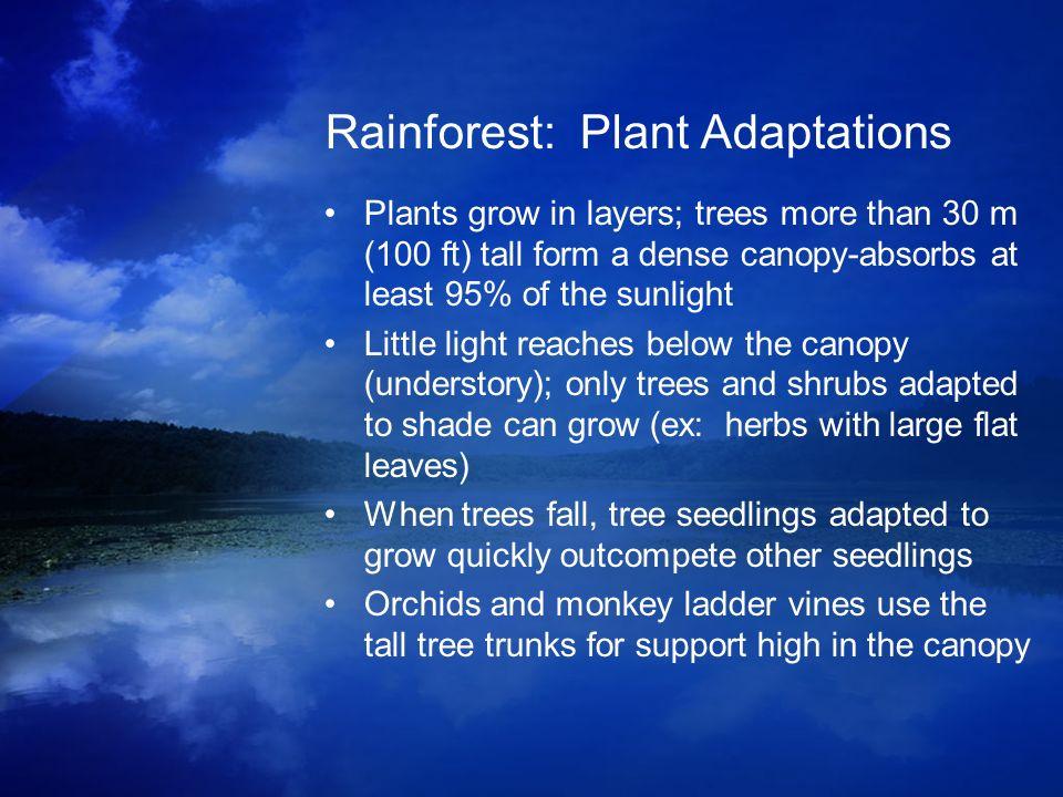 Rainforest: Plant Adaptations