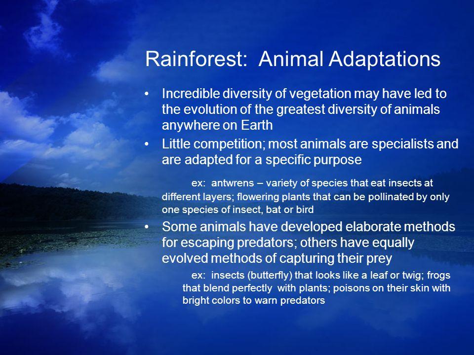 Rainforest: Animal Adaptations