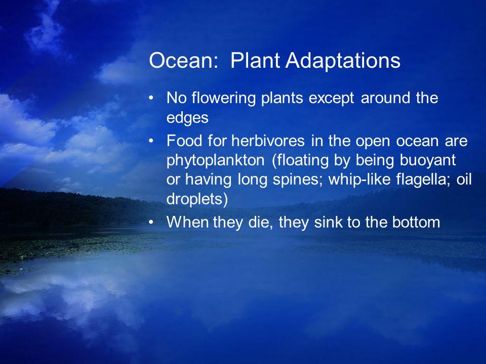 Ocean: Plant Adaptations
