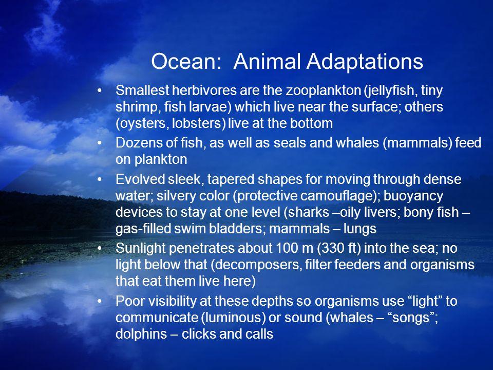Ocean: Animal Adaptations