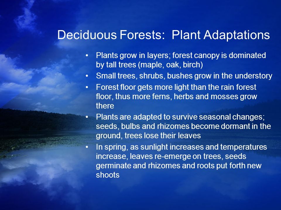 Deciduous Forests: Plant Adaptations