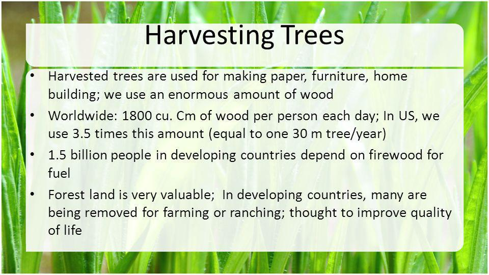 Harvesting Trees Harvested trees are used for making paper, furniture, home building; we use an enormous amount of wood.