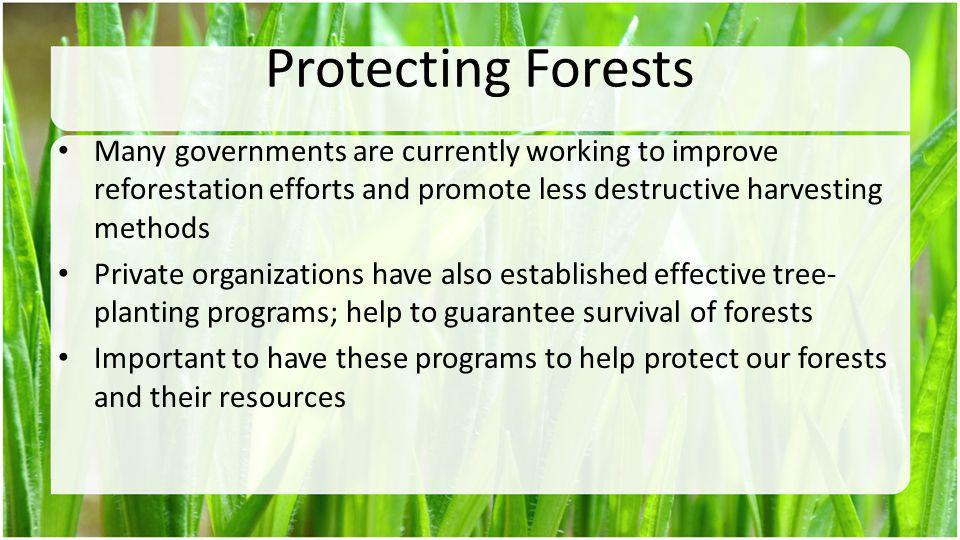 Protecting Forests Many governments are currently working to improve reforestation efforts and promote less destructive harvesting methods.