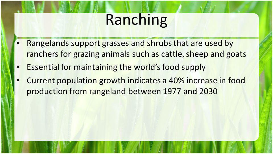 Ranching Rangelands support grasses and shrubs that are used by ranchers for grazing animals such as cattle, sheep and goats.