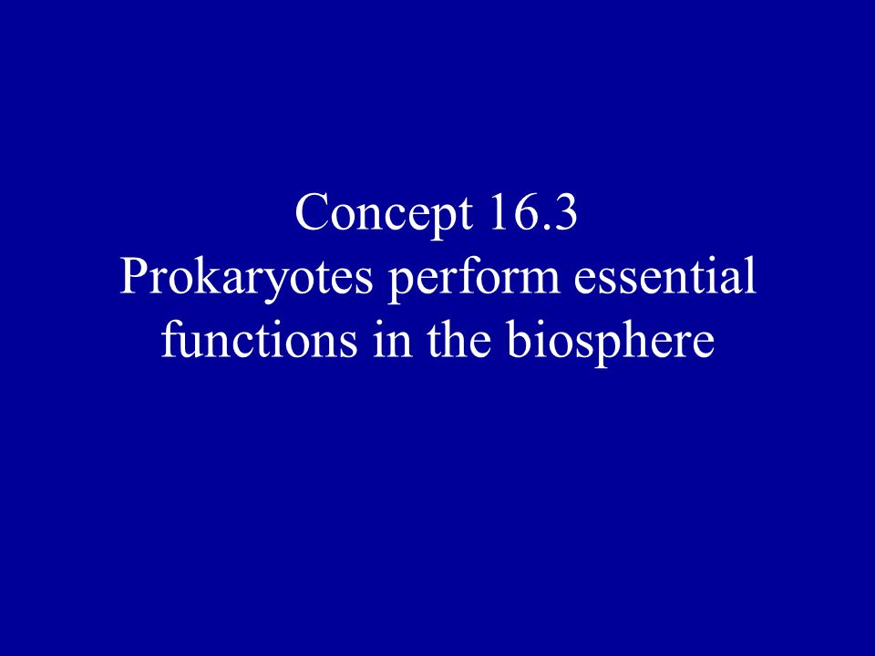 Concept 16.3 Prokaryotes perform essential functions in the biosphere