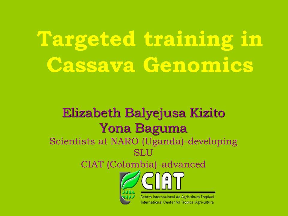 Targeted training in Cassava Genomics