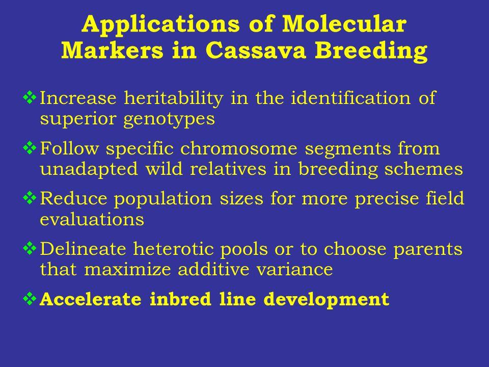 Applications of Molecular Markers in Cassava Breeding