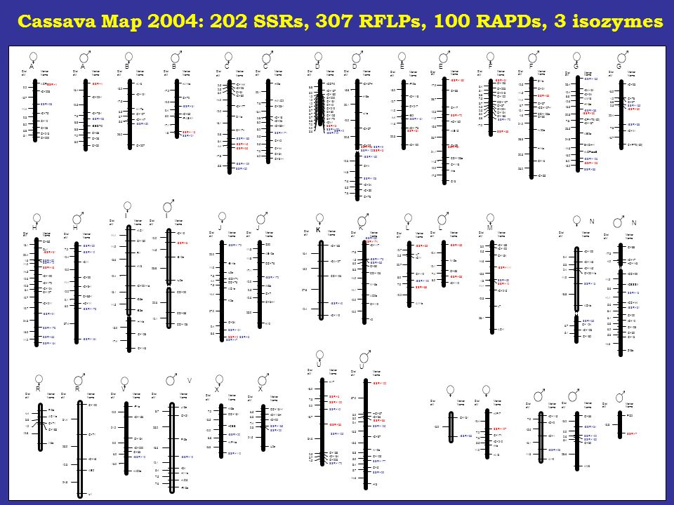 Cassava Map 2004: 202 SSRs, 307 RFLPs, 100 RAPDs, 3 isozymes