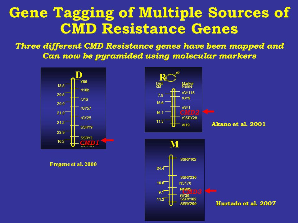 Gene Tagging of Multiple Sources of CMD Resistance Genes