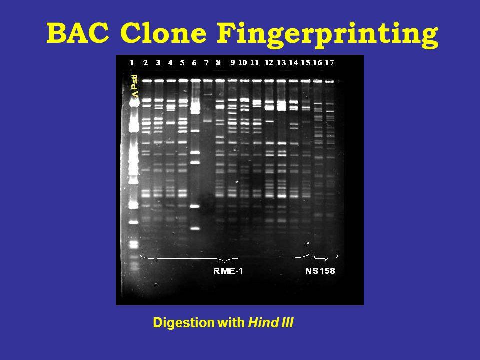 BAC Clone Fingerprinting