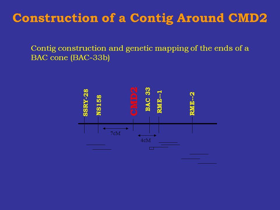 Construction of a Contig Around CMD2