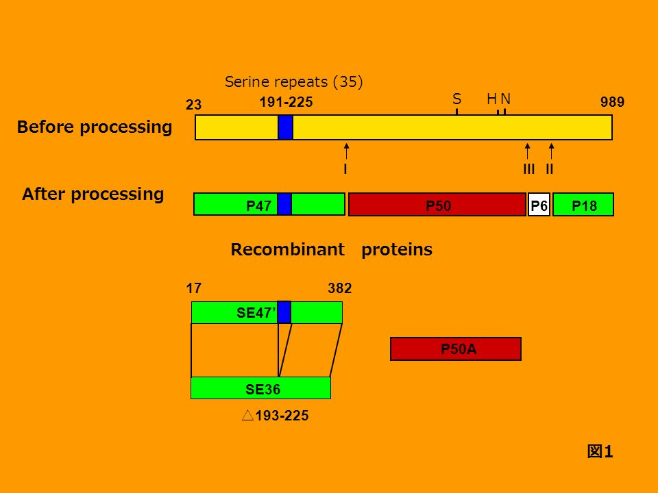 Before processing After processing Recombinant proteins 図1