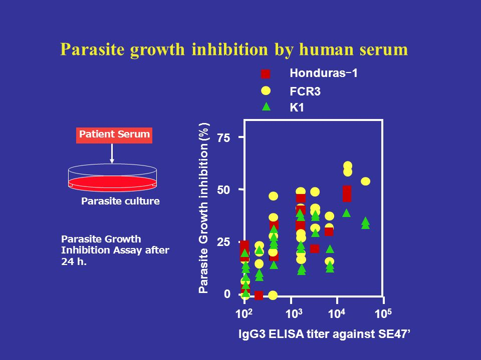 Parasite growth inhibition by human serum
