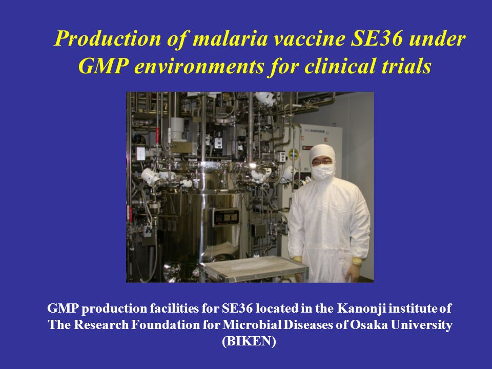 Production of malaria vaccine SE36 under