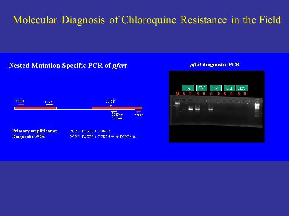 Molecular Diagnosis of Chloroquine Resistance in the Field