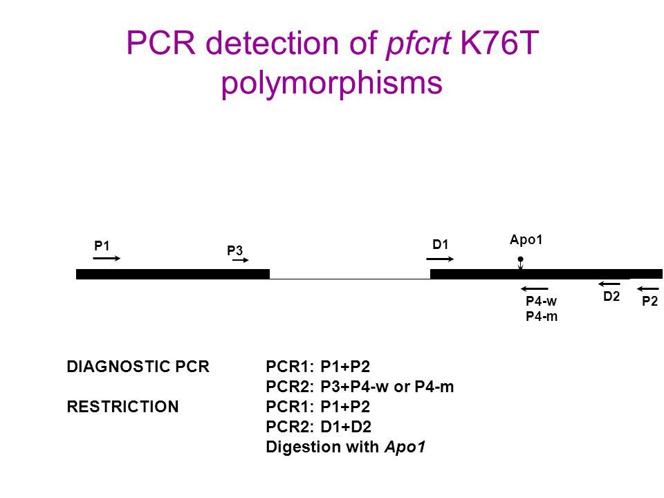 PCR detection of pfcrt K76T polymorphisms