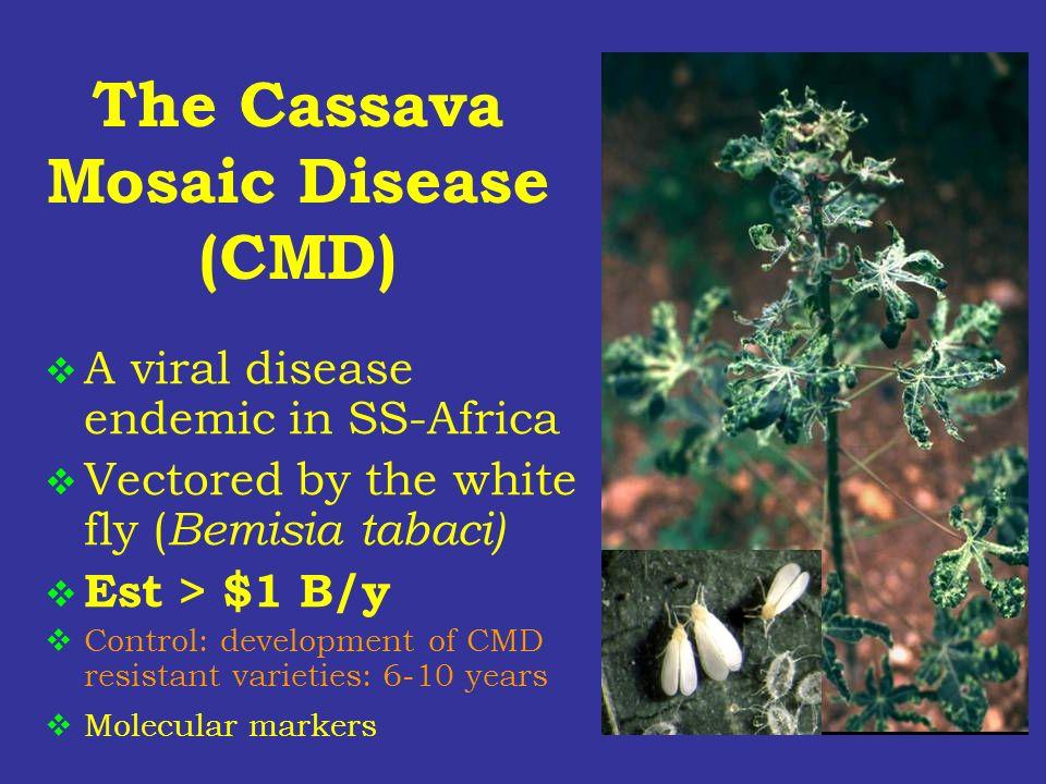 The Cassava Mosaic Disease (CMD)