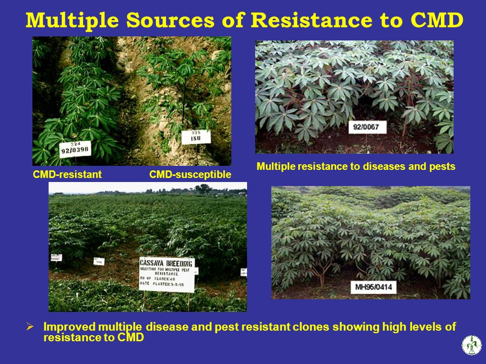 Multiple Sources of Resistance to CMD
