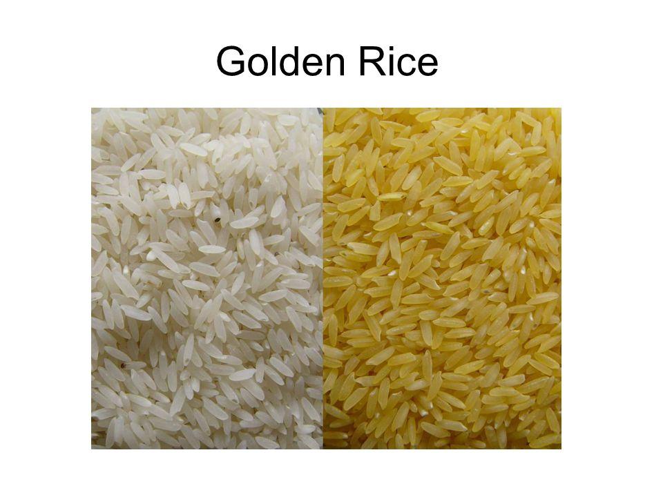 Golden Rice From wikipedia http://en.wikipedia.org/wiki/File:GoldenRice-WhiteRice.jpg