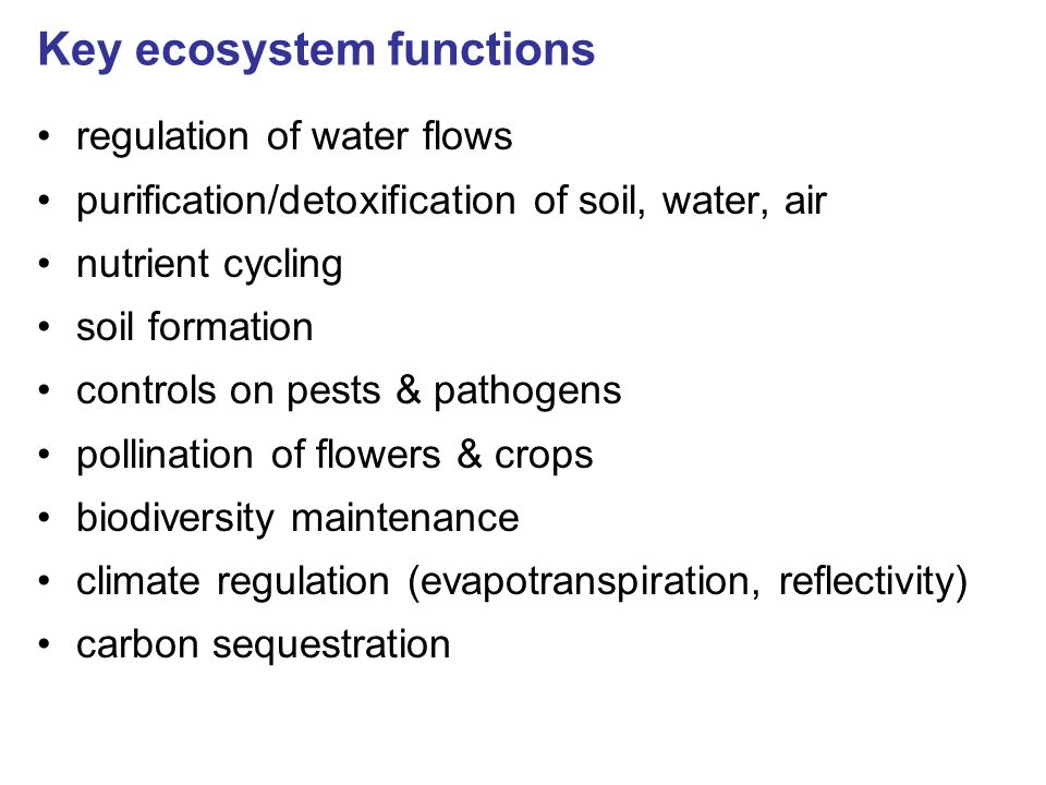Key ecosystem functions