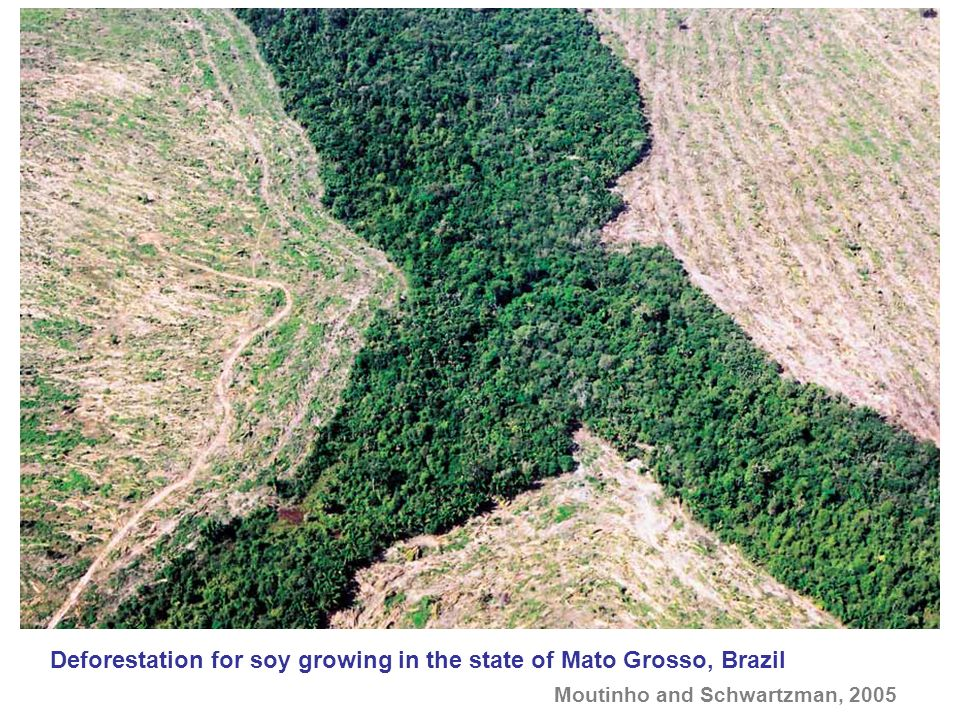 Deforestation for soy growing in the state of Mato Grosso, Brazil