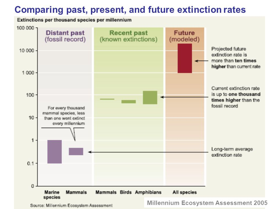 Comparing past, present, and future extinction rates