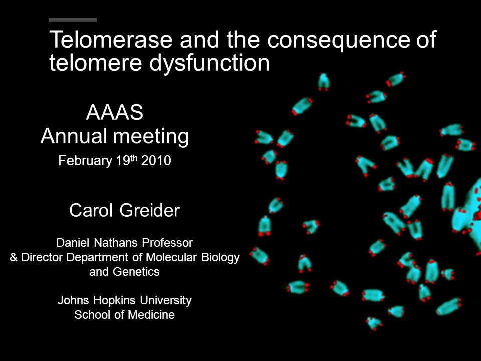 Telomerase and the consequence of telomere dysfunction