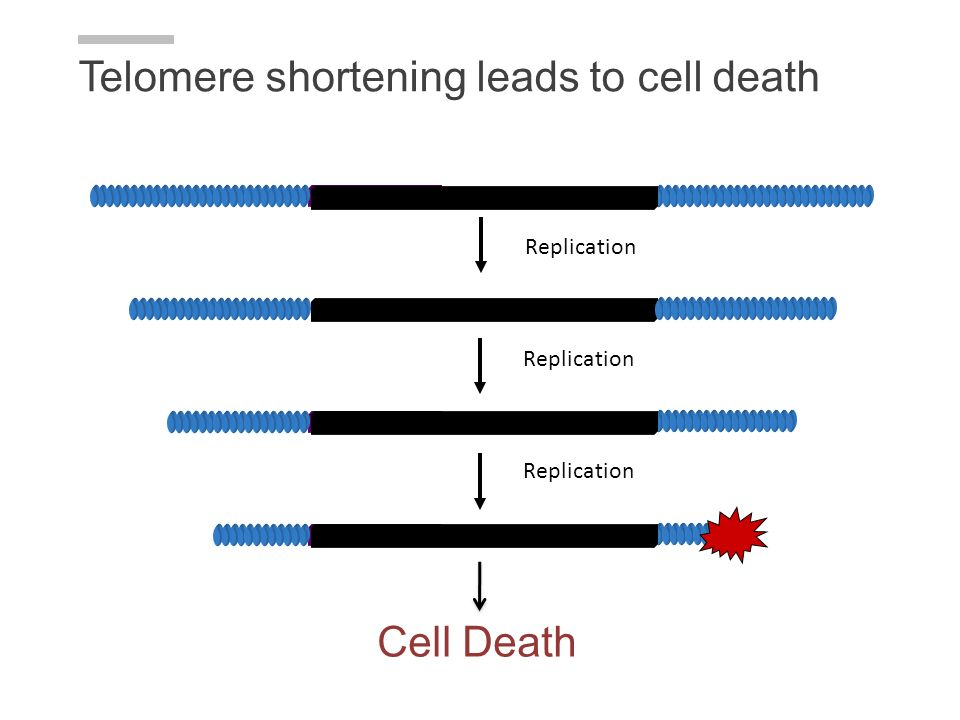 Telomere shortening leads to cell death