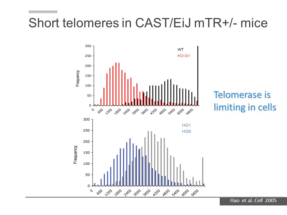Short telomeres in CAST/EiJ mTR+/- mice