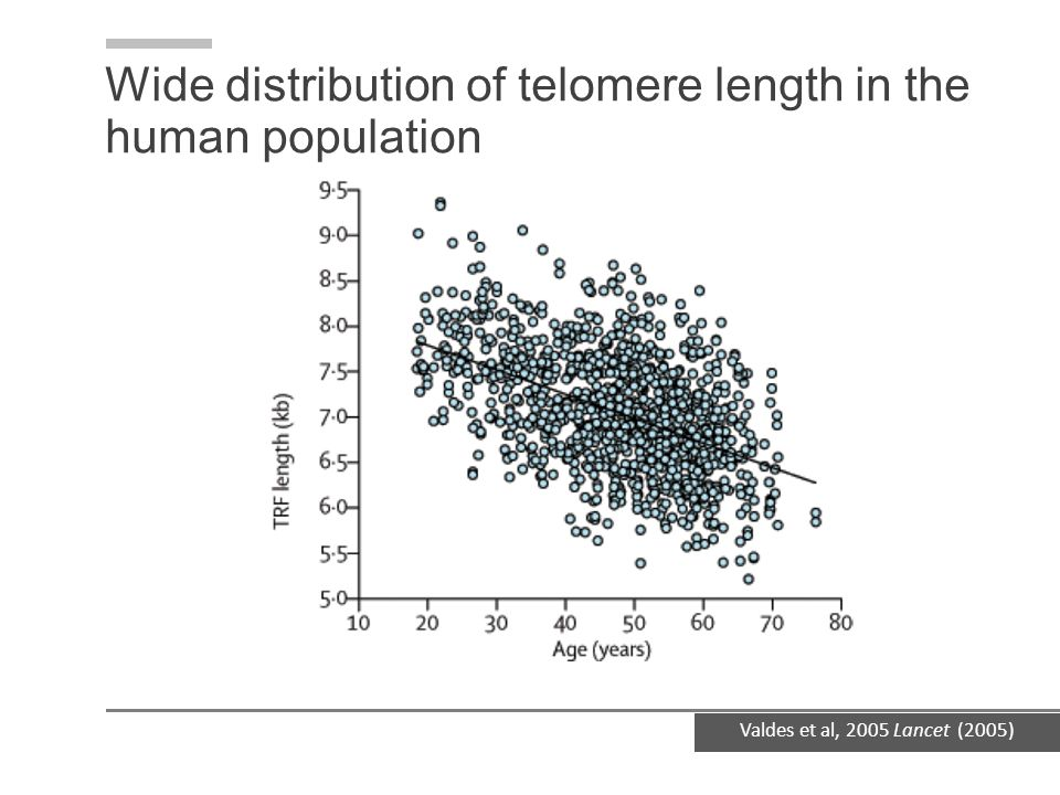 Wide distribution of telomere length in the human population
