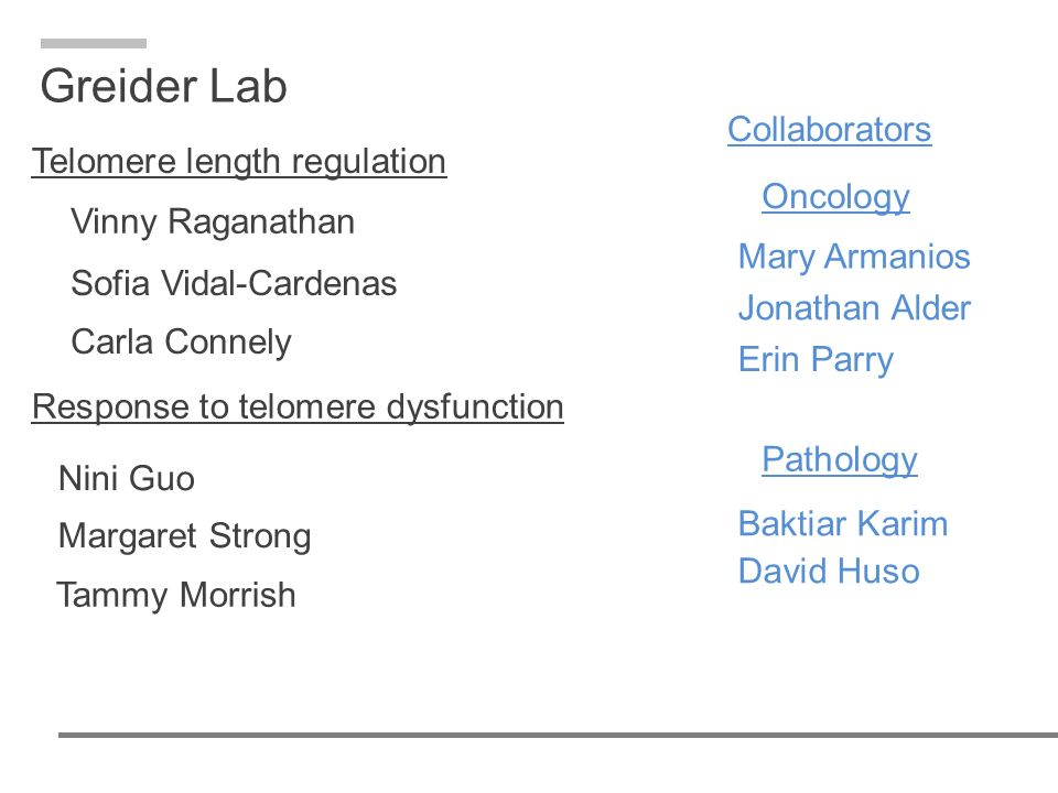 Greider Lab Collaborators Telomere length regulation Oncology