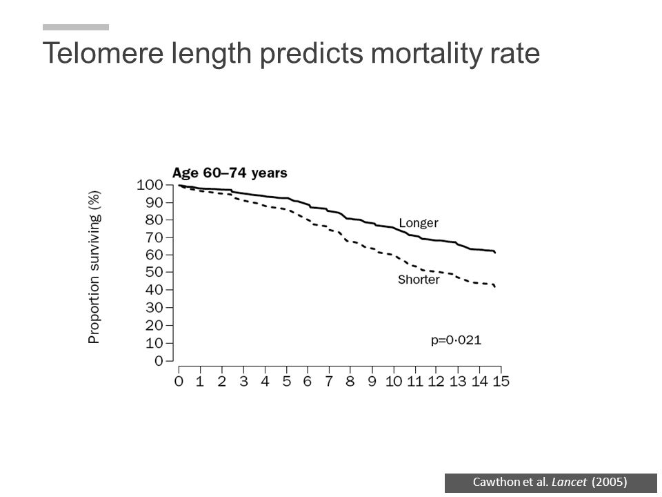 Telomere length predicts mortality rate