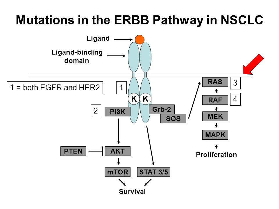 Mutations in the ERBB Pathway in NSCLC