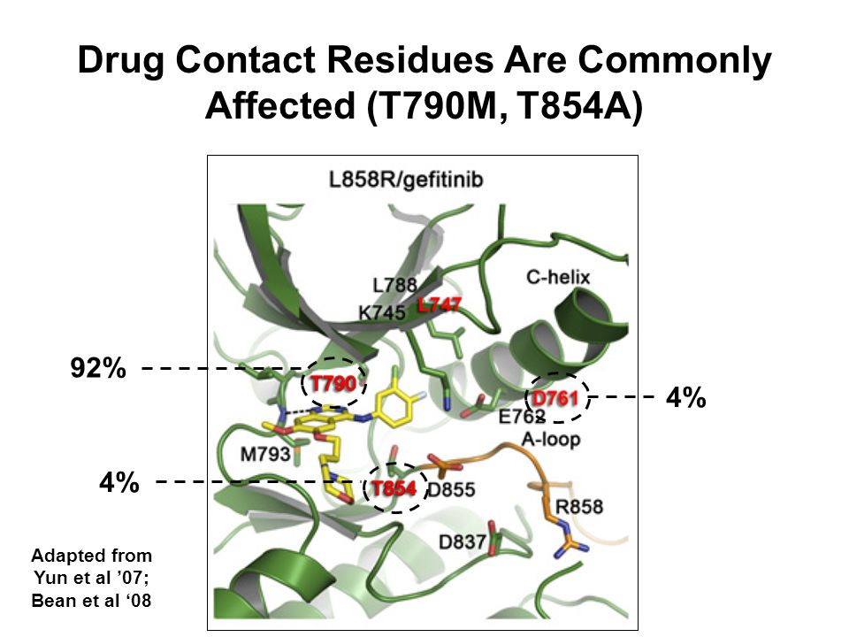 Drug Contact Residues Are Commonly Affected (T790M, T854A)