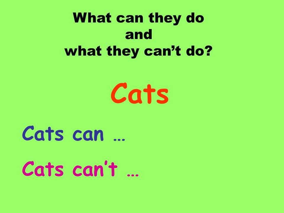 What can they do and what they can't do Cats Cats can … Cats can't …