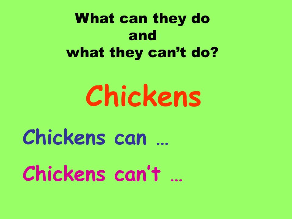Chickens Chickens can … Chickens can't … What can they do and