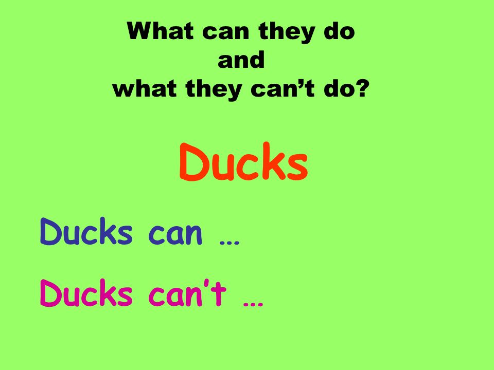 Ducks Ducks can … Ducks can't … What can they do and