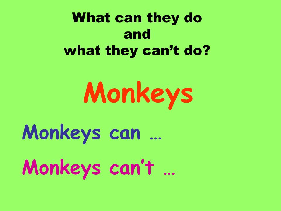 Monkeys Monkeys can … Monkeys can't … What can they do and
